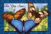 Recall Card - 3 Butterflies Laser 4-Up (200)